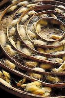 A wicker basket of concentric circles holding silkworms and their cocoons. Chiang Mai, Thailand. Chiang Mai, Thailand.