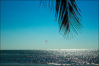 A para sail is gliding over shimmering blue sea, while a palm leaf hanging from above. Key West, Florida.