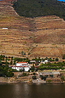 vineyards quinta dos murcas douro portugal