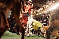 Champion dogs and their handlers wait for competition to begin on the last day of the 130th Annual Westminster Dog Show at Madison Square Garden on Tuesday, February 14, 2006.