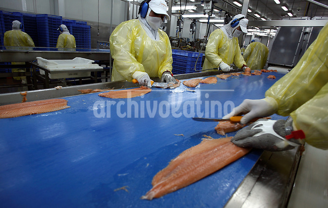 Salmon are prepared prior to freezing at a Marine Harvest facility near Puerto Montt, Chile,.Marine Harvest, a Norwegian company, is the world's largest producer of    salmon.