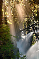 """FALLING RAYS"" -- Late afternoon light rays streaking in over Sol Duc Falls in Olympic National Park. Washington, United States."