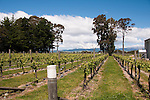 New Zealand South Island, vineyard at Nautilus Winery in Marlborough. Photo copyright  Lee Foster.
