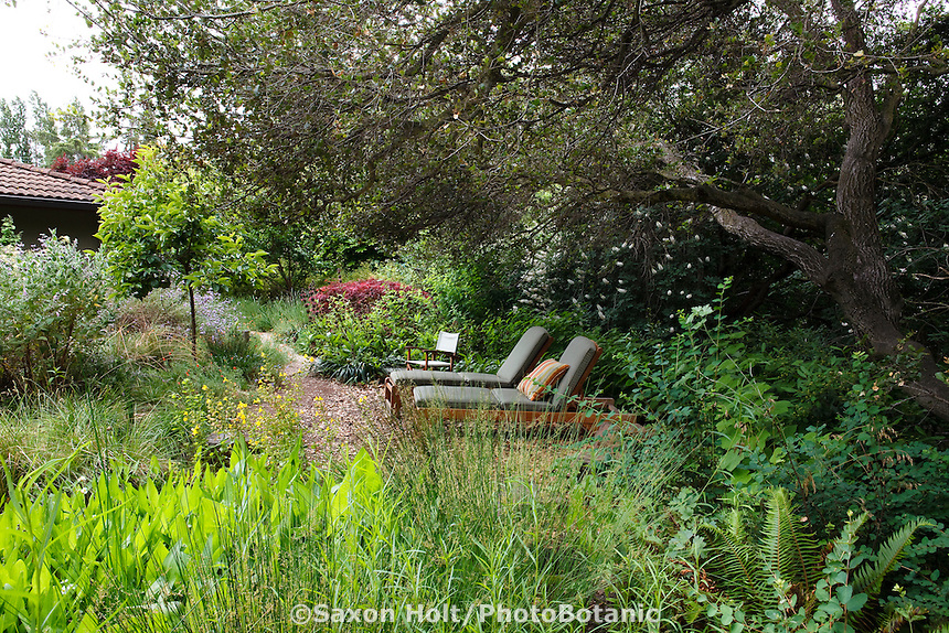 lounge chairs under shady oak trees in back yard habitat california native plant garden with bog