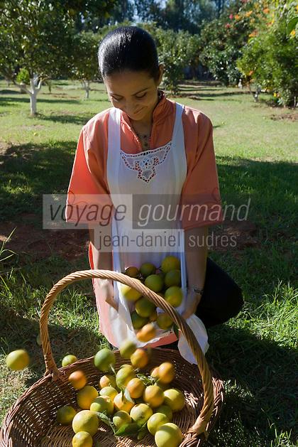 Afrique/Afrique du Nord/Maroc/Rabat: Hotel - Maison d'Hote Villa Mandarine Souad cueille els oranges dans l'orangeraie du parc [Non destiné à un usage publicitaire - Not intended for an advertising use]
