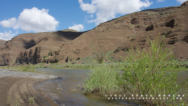 Sand, rock, and willow on the John Day River, Oregon.