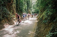 racing through the forest<br /> <br /> 3rd Dwars Door Het hageland 2018 (BEL)<br /> 1 day race:  Aarschot > Diest: 198km