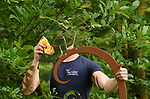 Pictured:  Ethan Mack, 18, a student horticulturalist, gives the chameleon a clean, revealing it's shape.<br /> <br /> A piece called Adapt, by Charles Bran, uses a reflective piece of metal to reflect items close to it so the chameleon becomes 'invisible' as it blends in with it's surroundings.<br /> <br /> Based on the reptile which would usually camouflage itself from predators the sculture is made from polished stainless steel, with the 'plant' it is sat on made of another metal called corten.<br /> <br /> The piece has been with Sir Harold Hillier Gardens, in Romsey, Hants, a little longer than planned after the recent lockdown restrictions meant it is still awaiting collection by the artist and so is spending a little longer for visitors to enjoy - if they spot it.<br /> <br /> The sculpture which has been in the arboretum for over a year is still being discovered for the first time by regular visitors to the gardens because of it blending in so well with it's enviroment.<br /> <br /> © Simon Czapp/Solent News & Photo Agency<br /> UK +44 (0) 2380 458800