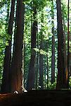 Butano State Park, CA
