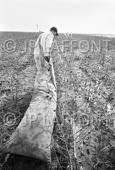 Cummins, AR - February 3rd 1968<br /> During the day, the prisoners worked on the fields, 10 hours per day, six days per week. A prisoner drags a bag of cotton. A prisoner picks cotton on the farm at the Cummins unit of Arkansas State Penitentiary. The corruption scandal of the historical penitentiary inspired the 1980 film Brubaker, which chronicled the warden's inside investigation into the corrupt southern prison system.<br /> Cummins, Arkansas. 3 f&eacute;vrier 1968.<br /> Cette prison en Arkansas est une vaste ferme que les prisonniers entretiennent. C'est l'&eacute;poque de la cueillette  manuelle du coton et en guise de boulet, ces hommes vont tra&icirc;ner sous le soleil, toute la journ&eacute;e, un sac contenant des dizaines de kilos de boules de coton. Les prisonniers travaillaient dans les champs six jours par semaine, dix heures par jour.