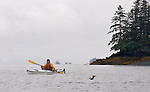 Alaska, Prince William Sound, Esther Passage, salmon jumping, David Fox, released,.
