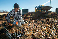 NWA Democrat-Gazette/BEN GOFF @NWABENGOFF<br /> Davanice Tasco (left) spreads daffodil bulbs as Orville Hutchins covers them with soil, both with Fresh-N-Green Landscape Company based in Springdale, Wednesday, Jan. 9, 2019, next to John DeShields Boulevard in Bentonville. A Walton Family Foundation grant at the recommendation of Steuart Walton is supporting a beautification project to plant 300,000 daffodil bulbs at sites in Bentonville.