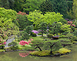 Seattle, WA: Spring view of the lake of the Japanese Garden in Washington Park Arboretum