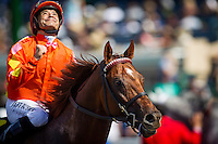 July 20, 2014: Tom's Tribute with Mike Smith aboard wins the Eddie Read Stakes at Del Mar Race Track in Del Mar CA. Alex Evers/ESW/CSM