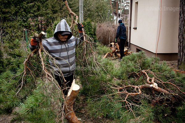 OTWOCK, POLAND, 15/03/2017:<br /> Tomasz and Andrzej are picking up parts of the tree in a small town of Otwock near Warsaw, March 15, 2017. The new controversial law has allowed to cut the trees that were previously banned and there's been a sure in cutting trees all over the country. <br /> (Photo by Piotr Malecki / Napo Images)<br /> ****<br /> OTWOCK,  15/03/2017:<br /> Wycinka dwoch drzew na prywatnej dzialce w Otwocku po wprowadzeniu przez ministra srodowiska Jana Szyszke prawa o swobodym wycinaniu drzew.Fot: Piotr Malecki / Napo Images