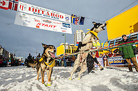 Monica Zappa's dogs jump to leave the start line during the Ceremonial Start of the 2016 Iditarod in Anchorage, Alaska.  March 05, 2016