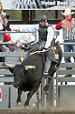 20 Aug 2014: Jesse Kardos riding the bull Secret Stash was not able to score during the first round of the Seminole Hard Rock Extreme Bulls competition at the Kitsap County Stampede in Bremerton, Washington.