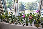 2019_10_05 Deep Cut Orchid Society Auction_Terri