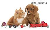 Kim, CHRISTMAS ANIMALS, photos, GBJBWP25465,#XA# stickers