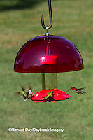 01162-12908 Ruby-throated Hummingbirds (Archilochus colubris) at Dr. JB's Hummingbird Feeder with Hummer Helmet, Marion County, IL