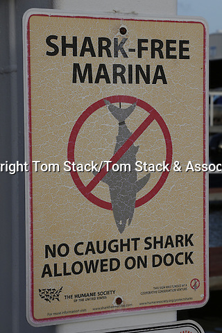 "A ""Shark Free Marina"" warning sign posted in the Florida Keys"