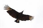 Vultures*