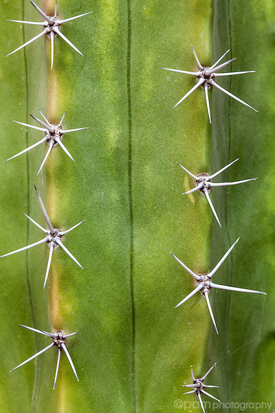 Close up of cactus spines