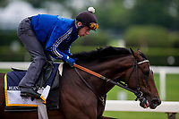 ELMONT, NY - JUNE 07: Blended Citizen gallops in preparation for the 150th Belmont Stakes at Belmont Park on June 07, 2018 in Elmont, New York. (Photo by Alex Evers/Eclipse Sportswire/Getty Images)