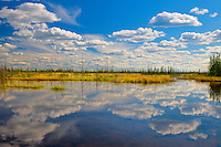 Clouds reflected in wetland<br /> Wood Buffalo National Park<br /> Northwest Territories<br /> Canada