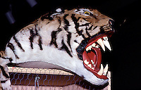 Tiger, Confiscated by U.S. Customs