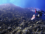 A diver swims past walls of coral at the Grotto, the best-known dive site in Saipan. .Robert Gilhooly Photo