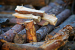 Firewood of pine in the woods outside Oslo, Norway