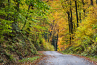 Unpaved mountain road with peal autmn foliage, Vermont, USA.