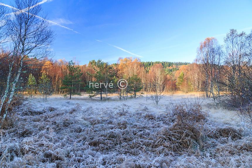 Haute-Vienne, Creuse (23), plateau de Millevaches, Saint-Pierre-Bellevue, matin d'hiver