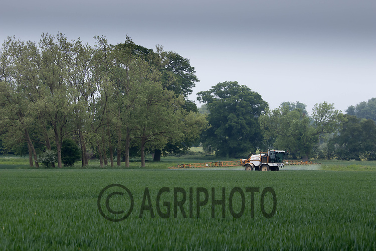 Spraying T2 on Winter Wheat<br /> ©Tim Scrivener Photographer 07850 303986<br /> ....Covering Agriculture In The UK....