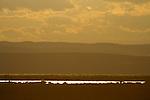 Sonnenuntergang, Leithagebirge, Apetlon, Nationalpark Neusiedlersee, Seewinkel, Bezirk Neusiedl am See, Burgenland, Austria, Österreich.