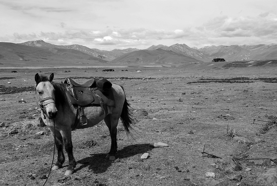 Outdoor landscape images of horses and mountains in black and white photograph. China nature stock images by Paul Chong.