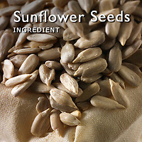 Sunflower Seed Pictures | Sunflower Seed Photos Images & Fotos