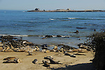 Elephant seals at North Point