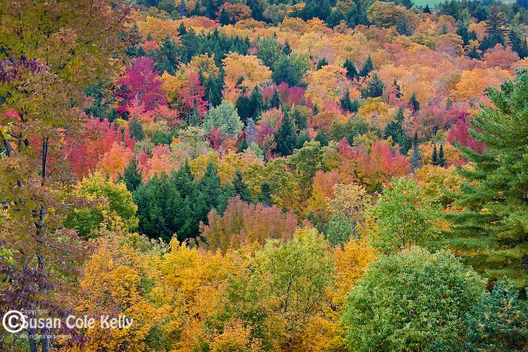 Fall foliage in Peacham, VT, USA
