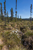 Tundra and tussocks along the Charley River, Yukon Charley Rivers National Preserve, Alaska