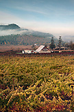 USA, Oregon, Medford, Valley View Winery is in Southern Oregon Rouge Valley and spans twelve acres, they primarily use grapes from the Applegate and Bear Creek Valleys