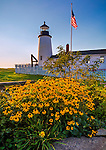 Lincoln County, ME: Rudbeckia (Black-eyed Susans) blooms in a small garden on the grounds of Pemaquid Point Lighthouse (1835)