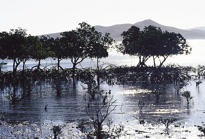 Baie papaye, Païta