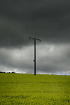 Electric wooden power pole in field of oilseed rape against grey moody sky. Aschaffenburg area, Germany