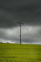 Electric wooden power pole in field of oilseed rape against grey moody sky. Aschaffenburg area, Germany