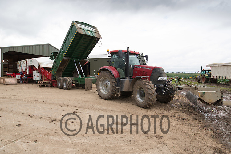 Grading potatoes ready for storage <br /> Picture Tim Scrivener 07850 303986<br /> &hellip;.covering agriculture in the UK&hellip;.