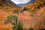 Fall foliage at Crawford Notch, Crawford Notch State Park, White Mountains, NH