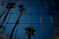 Studio City, California, July 14, 2010 - Palm trees reflected in a glass high-rise in Studio City next to CBS Studios. In January, 165 television writers who were plaintiffs in a 10-year-old class-action age-bias case against more than two dozen defendants that essentially run the television business was settled for $70 million. Among the defendants  are the big networks and production studios and seven major talent agencies..