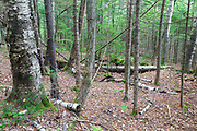 The Zeke Dustin Place home site cellar hole along Sandwich Notch Road in Sandwich, New Hampshire. During the early nineteenth century, thirty to forty families lived (hill farm community) in the Notch, and by 1860 the community was just about abandoned.